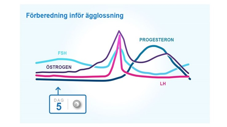 öka östrogen i kroppen